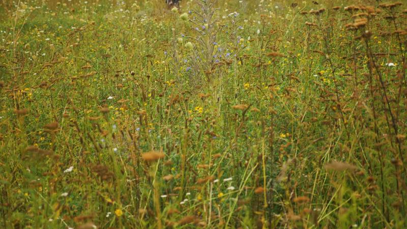 Nachhaltigkeitspreis für den ökumenischen und ökologischen Insektenkorridor in Bonn-Beuel